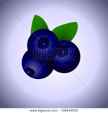 Blueberry, leaves and berries isolated Realistic digital paint. Vector illustration.