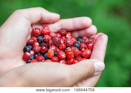 woman holding forest berries in open palms, close up. organic food concept. vertical