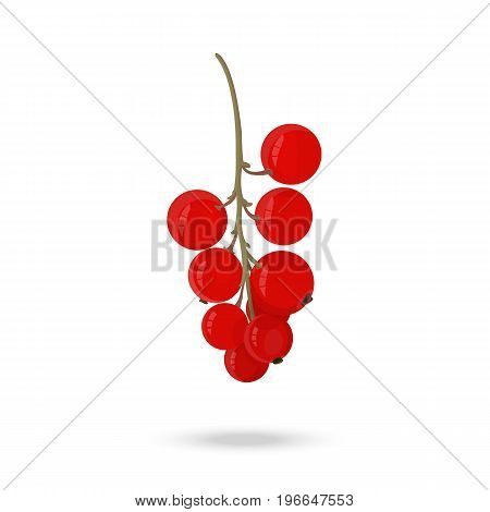 Berry red currant on a green branch on a white background. Vector illustration
