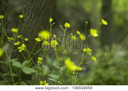 A multitude of yellow flowers in a park. Great as background or texture for graphic designs.