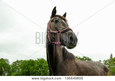 graceful black horse in a green field