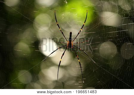 Spider in the forest with natural bokeh