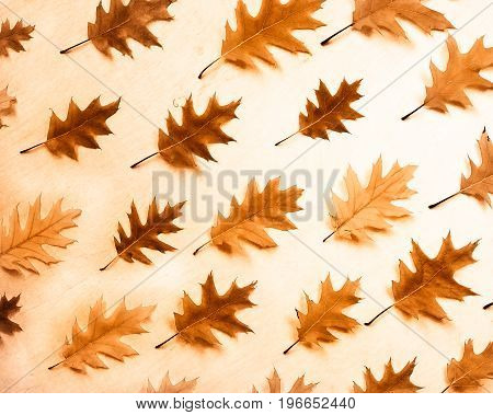 Autumn oak leaves background. Autumn oak leaf pattern