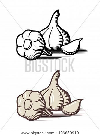 Vector illustration of garlic outline and colored version