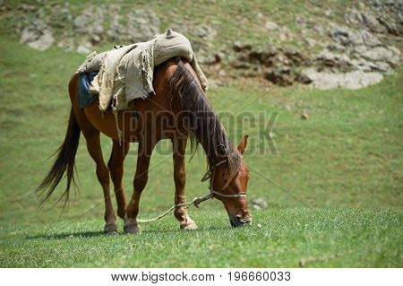 Horse is garazing in the field, hill and grass