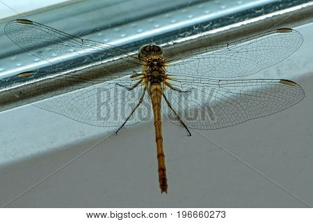 Very beautiful dragonfly sitting peacefully at the window