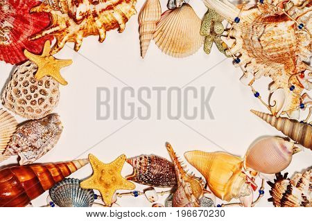 Different sea shells star fish and other sea souvenirs as a frame on clear paper background