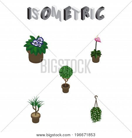 Isometric Houseplant Set Of Houseplant, Blossom, Tree And Other Vector Objects