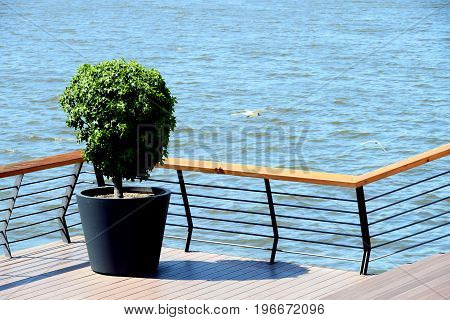 Topiary ornamental plant in the large pots, on the terrace over the water