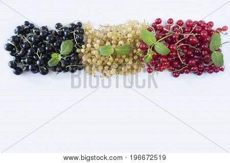 Currant and mint isolated on white background. Red white and black currants at border of image with copy space for text. Top view.