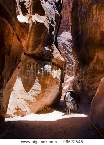 A touristic horse carriage driven by a local guide rushes through the stone corridor leading to Petra's famous Treasury temple.