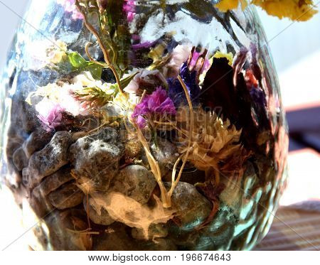 Reflection of the plants and sky on the helium balloon