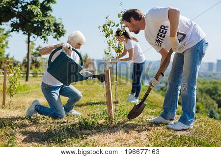 Fresh start. Radiant emotional optimistic people working as volunteers and participating in eco campaign while planting a lot of new trees