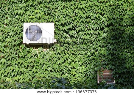 Air conditioner on the wall covered with ivy creeper