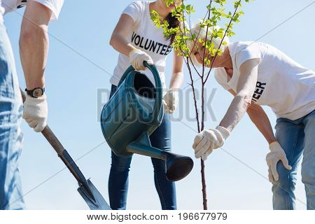 Following steps. Team of diligent progressive optimistic citizens being enthusiastic about environment and improving their local park by planting new trees