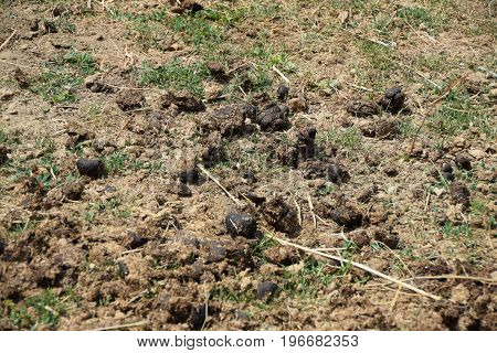 Horse muck as a fertilizer for the soil in agriculture