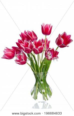 Bunch of beautiful pink tulips in a vase on white background
