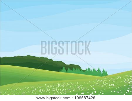 blue sky and large floral field a spring landscape - illustration