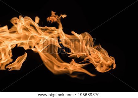Flame of fire on a black background 4