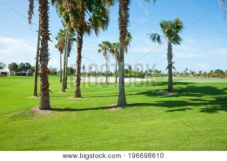 Palm trees cast shadow over golf course fairway with sand bunker beyond.