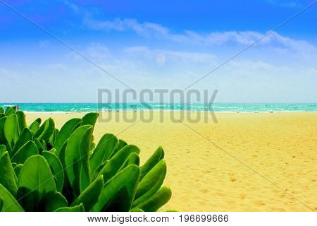 A solitary plant poses on the beach by the sea under a beautiful blue sky