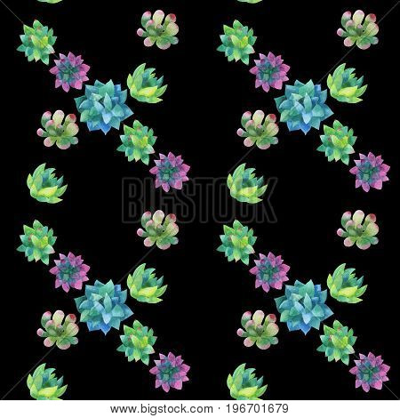 Seamless pattern made of hand-drawn watercolor succulent plants multicolored isolated on dark background