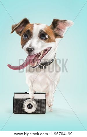 The dog taking a photo with an old camera