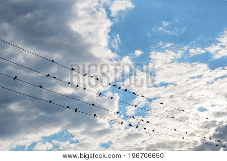 A flock of birds sitting on wires against the sky