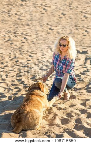 Dog training. A big funny dog labrador performs a command - lie down and waits for reward. A wonderful summer day on the beach. Young woman with a red labrador trains on the sand