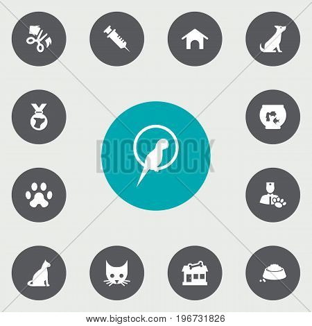 Collection Of Injection, Fishbowl, Cat And Other Elements.  Set Of 13 Pets Icons Set.