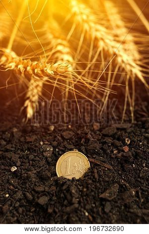 One euro coin in soil and harvested wheat ears for agriculture and agribusiness concept