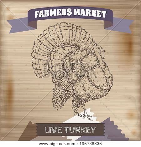 Farmers market label with live domestic turkey sketch. Placed on wooden texture. Includes hand drawn elements.