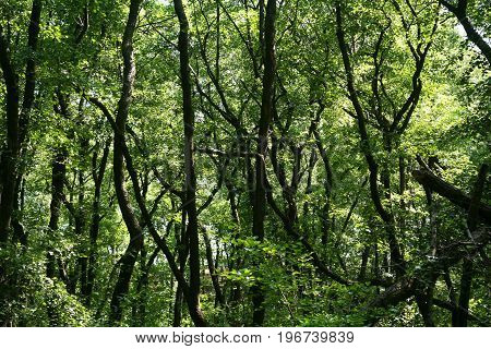 Lush green swamp . The sun is peaking through the thick foliage to reveal a gorgeous natural landscape