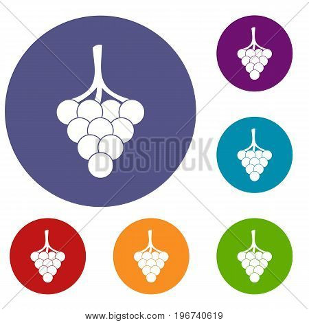 Grapes on the branch icons set in flat circle red, blue and green color for web