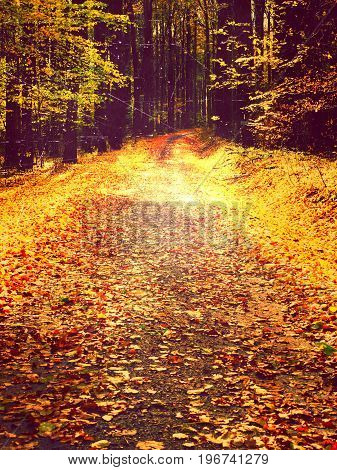 Film Effect. Path Leading Among The Beech Trees In Early Autumn Forest. Fresh Colors Of Leaves, Yell