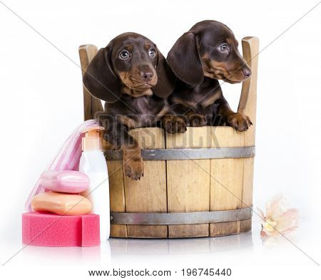 Washing puppies in a tub, grooming