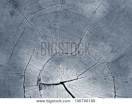 Section of a felled tree trunk toned blue.