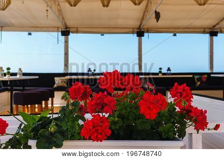 Red flowers in the flower pot in summer cafe at the Balchik town on black sea coast.