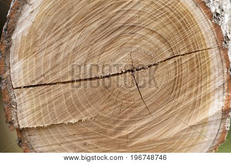 Cross section of tree trunk showing growth rings.