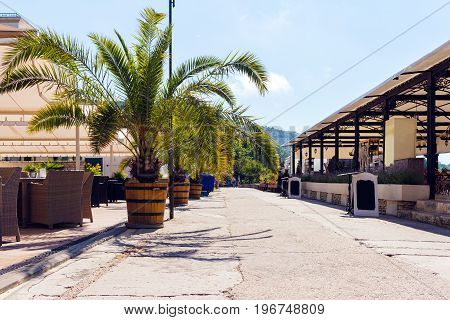 Street with palms summer cafe and restaurants on seashore in balchik town on black sea coast Bulgaria.