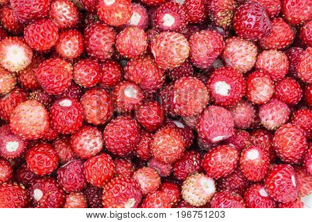 Fresh Wild Strawberry, Abstract Background