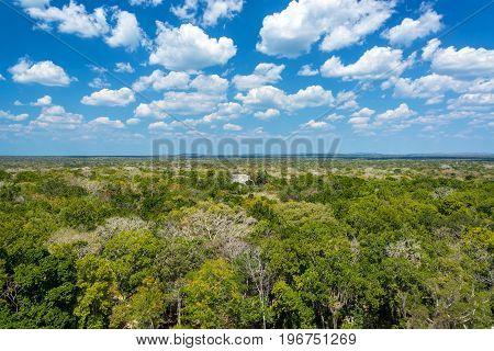 Jungle Landscape And Temple
