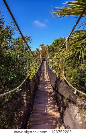 Footpath in jungle at Tenerife Canary - nature travel background