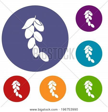 Branch of cornel or dogwood berries icons set in flat circle red, blue and green color for web