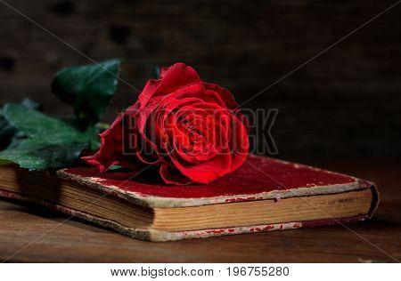 Red Rose On A Vintage Book On Dark Background