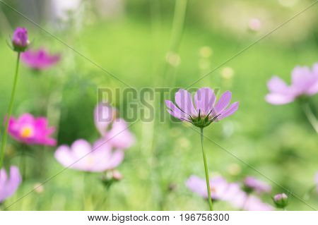 Delicate pink flowers on a delicate green background