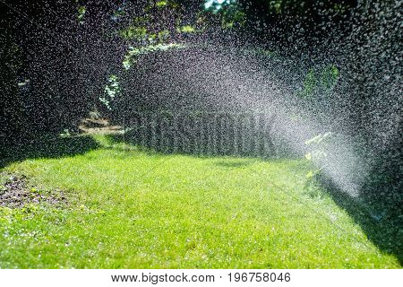Splashing water in the sun in the background flowers and grass in the garden