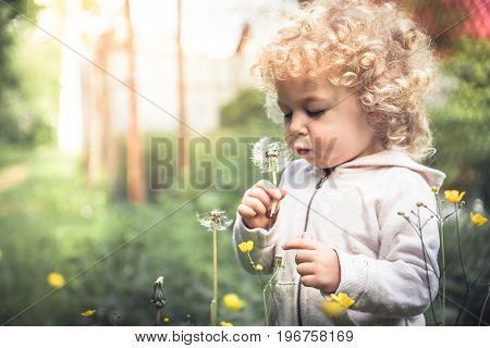 Cute curly curious child girl looking like dandelion blowing dandelion during summer holidays in park