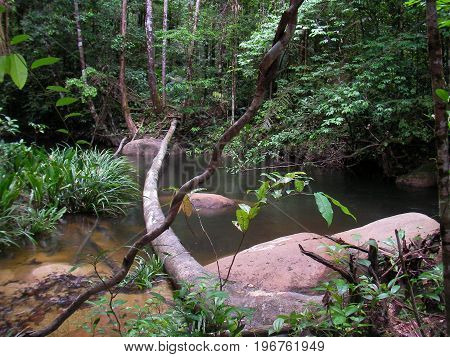 River in French guyana rainforest, south america.
