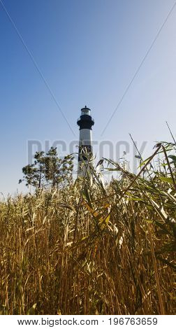 Low angle view of Bodie Lighthouse through marsh, Nags Head, Outer Banks, North Carolina USA